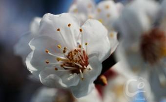 tavasz06